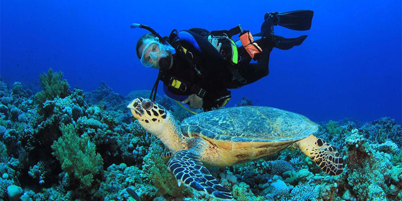 320-Full-Day-Scuba-Diving-Adventure-Tour-with-Lunch-at-Hurgada-12821512059456