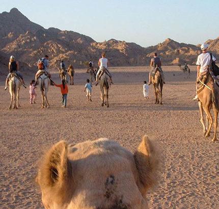 camping in the desert in Egypt