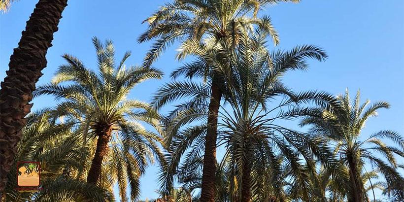 Cairo white desert