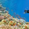 snorkeling-to-giftun-island copy